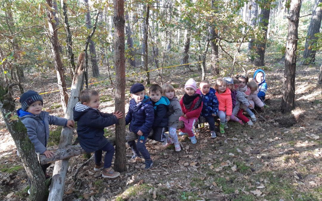 Sortie en forêt pour les PS / MS